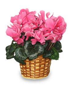 Bosses Day Flowering Plant Gift