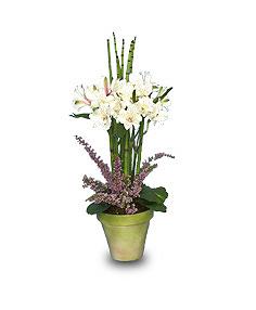 Alstroemeria Topiary Flower Arrangement