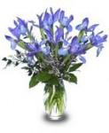 """""""Fleur De Lis"""" Iris Arrangement"""