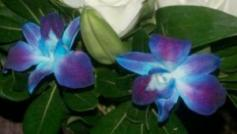 Can I Get Navy Blue Orchids For A Wedding Bouquet