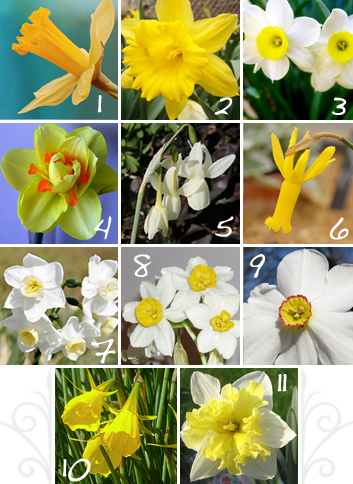 Types of Daffodils