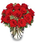 Red Roses - Passionate Love