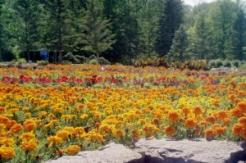 international-peace-garden