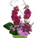 """High Society"" Spring Flowers"