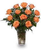 Orange Roses - Fascination