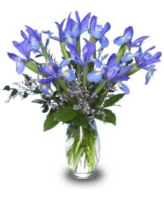 The color of violets inspires this gorgeous arrangement of iris.