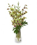 romantic-orchids