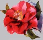 Camellia, The Alabama State Flower
