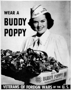 buddy-poppy