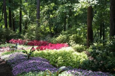 Garvan Garden Flowers
