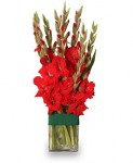 Fiery Red Gladiolus For Your Virgo!