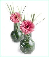 Gerbera Vases for Hors D'oeuvre Table Picture by Stephen Smith Florists'Review