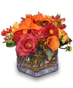 Orange Flower Mix