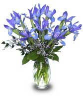blue iris flowers in a vase - Fluer-de-lis
