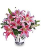 Picture of Stargazer Lilies in a vase.