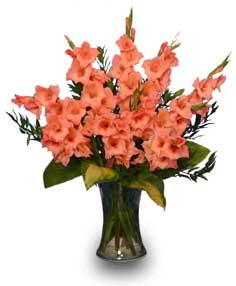 Orange Gladiolus - August Birthday Flowers