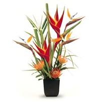 Tropical Flowers - Birds of Paradise - Protea - heliconias