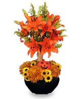 Halloween Topiary with orange lilies, mums and mini pumpkin