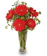 Vase of Red Gerberas