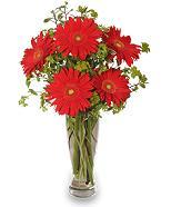 Vase of Red Gerberas
