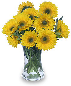All-Yellow Overall Winner Flowers