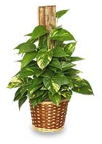 house plant care information