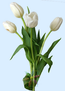tulip flower information tulip cut flower flower shop network