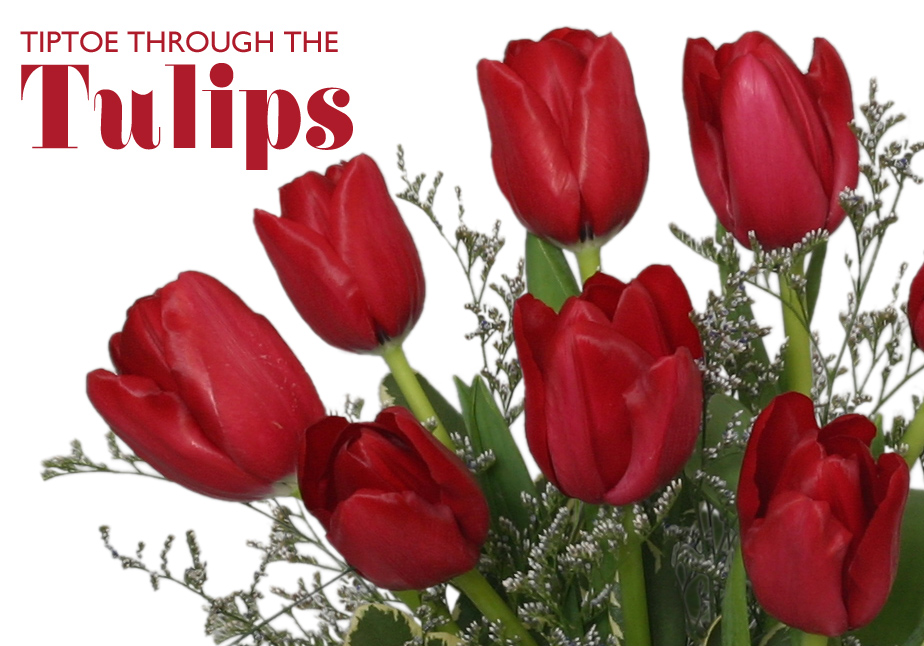 Information About Tulips