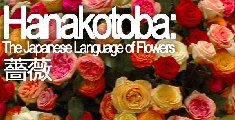 hanakotoba flower meanings