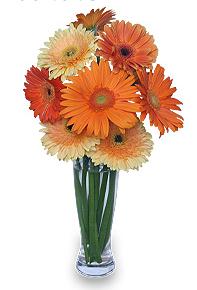 Peachy Gerbera Daisy Bouquet