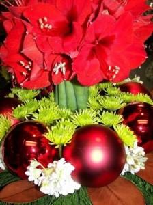 Amaryllis Christmas Centerpieces