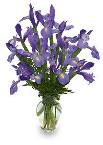 Amethyst Flowers - Purple Iris Picture