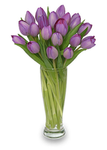 Purple Tulips For Valentine's Day