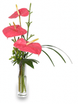 Anthurium Makes Valentine's Day Rose Alternative