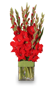 Gladiolus Flower Arrangement - For August Birthdays