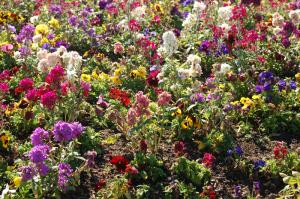 Golden Gate Bridge Flowers - Stock