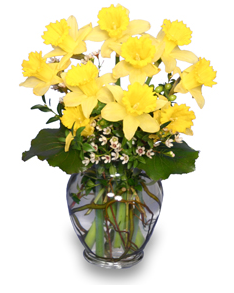 Daffodil Spring Flower Arrangement For March