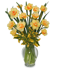 Double Daffodil Arrangement