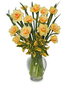 March Daffodil Arrangement