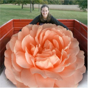 Giant Rose Found In Texas