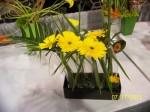 Yellow Flower - Daisy Design