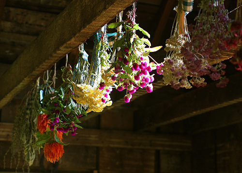 Drying Flowers by melingo wagamama