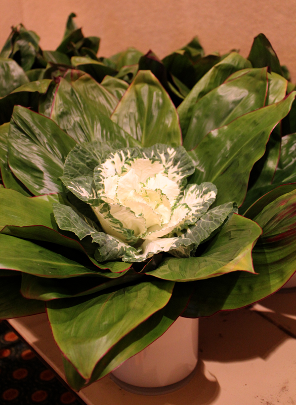 Cabbage in Floral Design