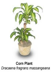 The How-To on houseplant identification,.