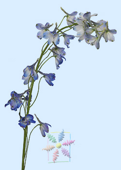 Delphiniumbelladonna Flowers on Delphinium Flower Information   Delphinium Cut Flower   Flower Shop