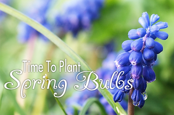 Fall Is The Time To Plant Your Spring Bulbs