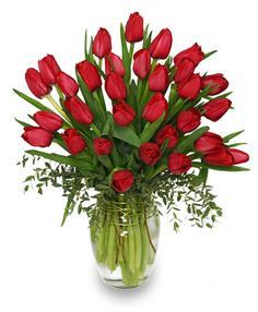 Red Christmas Tulips