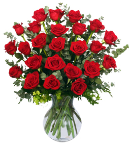 2 Dozen Roses for Valentines Day