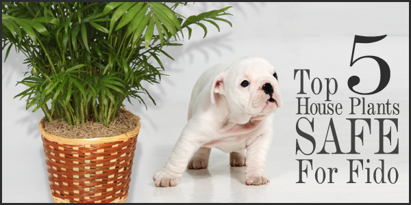 Top 5 Houseplants For Fido Safe For Pets