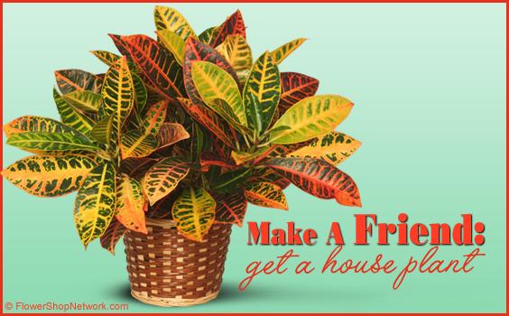 House Plant Friend